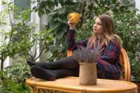 How to plan an aromatherapy garden