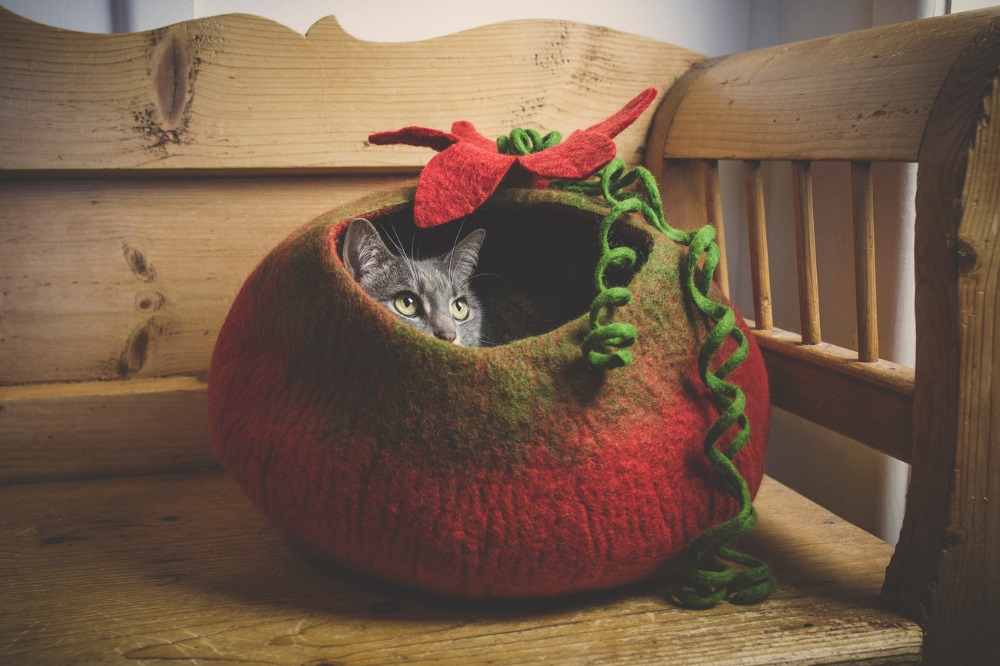 Planet-Friendly Pet Beds for the Eco-Conscious
